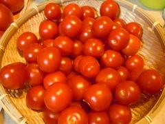 tomato004.jpg