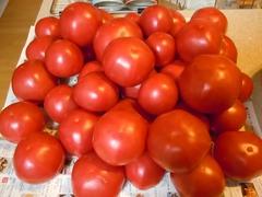 tomato008.jpg
