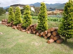 wood02.jpg
