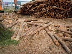wood04.jpg